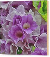 Mansoa Alliacea Wood Print