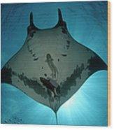 Manta Ray Of Revillagigedo Wood Print
