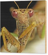 Mantis Dinner Wood Print