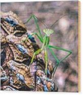Mantis On A Pine Cone Wood Print
