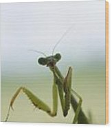 Mantis Wood Print