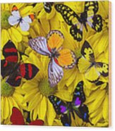 Many Butterflies On Mums Wood Print