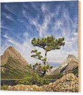 Many Glacier Tree Wood Print