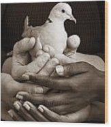 Many Hands Holding A Dove Wood Print
