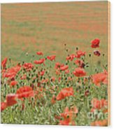 Many Poppies Wood Print