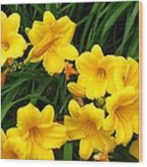 Many Summer Lillies Wood Print