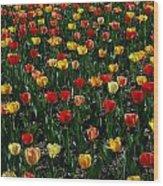 Many Tulips Wood Print
