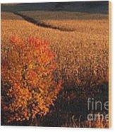 Maple And Cornfield At Dawn Wood Print