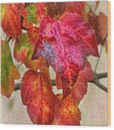 Maple Colors Wood Print