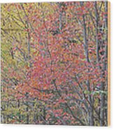 Maple Corner Foliage Wood Print