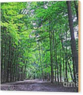 Maple Forest Wood Print