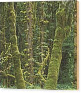 Maple Glade Quinault Rainforest Wood Print