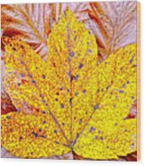 Maple Leaf In Fall Wood Print