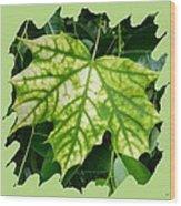 Maple Leaf In The Laurel Wood Print