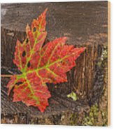 Maple Leaf On Oak Stump Wood Print