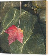 Maple Leaf On Water Wood Print