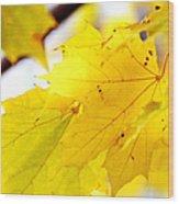 Maple Leaves At Autumn Glory 1 Wood Print