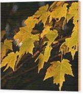 Maple Leaves - B Wood Print