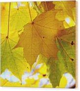 Maple Leaves In Autumn Glory Wood Print