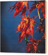 Maple Leaves Shadows Wood Print