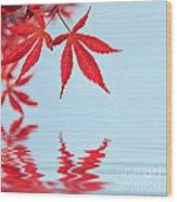 Maple Reflection Wood Print