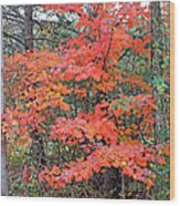 Maple Rush In The Fall Wood Print