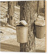 Maple Sap Buckets Wood Print