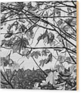 Maple Sunset - Paint Bw Wood Print