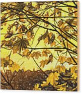 Maple Sunset - Paint Wood Print