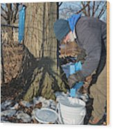 Maple Syrup Production Wood Print