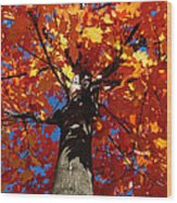 Maple Tree Wood Print