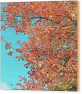 Maple Tree In Autumn Wood Print