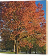 Maple Trees Wood Print