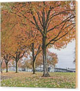Maple Trees In Portland Downtown Park In Fall Wood Print