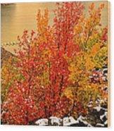 Maples Along The Palisades Wood Print