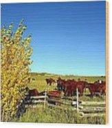 Marabou Cattle Herd Wood Print