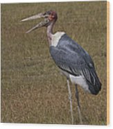 Marabou Stork   #0176 Wood Print