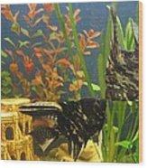 Marble Angelfish Kisses Wood Print