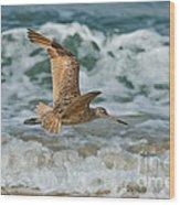 Marbled Godwit Over Surf Wood Print