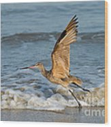 Marbled Godwit Taking Off On Beach Wood Print