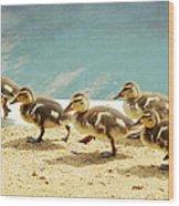 March Of The Ducklings Wood Print by Fraida Gutovich