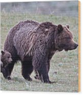 Marching Mama Grizzly And Cub  Wood Print