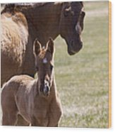 Mare And Foal   #0659 Wood Print