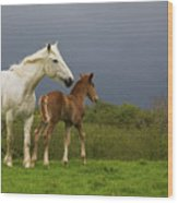 Mare And Foal, Co Derry, Ireland Wood Print