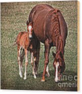 Mare With Foal Wood Print