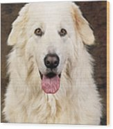Maremma Sheepdog Wood Print