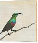 Marico Sun-bird Colors Wood Print