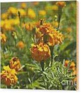 Marigold Flowers Wood Print