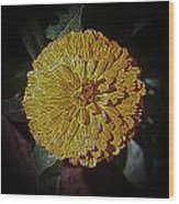 Marigold Digitized Wood Print