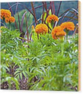 Marigolds Wood Print